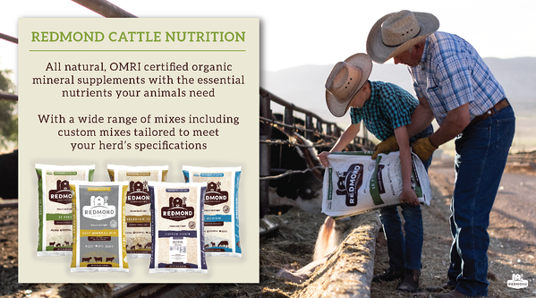 Redmond mineral supplements for cattle health