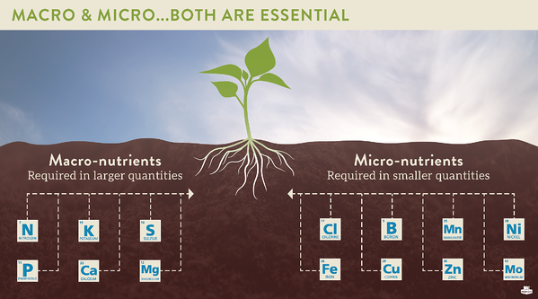 Essential Soil Health Nutrients, what plants need