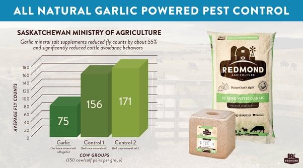 Garlic mineral salt reduces flies in cattle