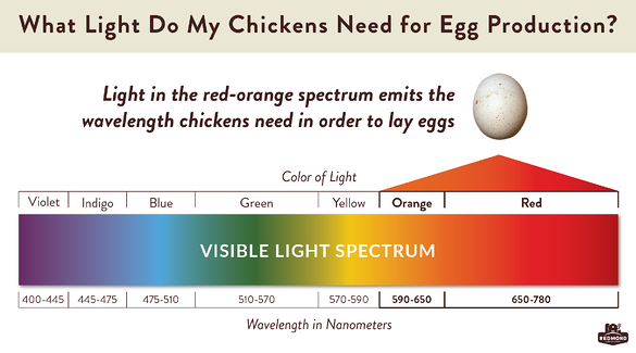 What light do chickens need for egg production