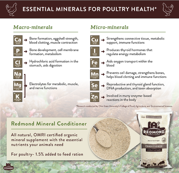 what minerals do chickens need