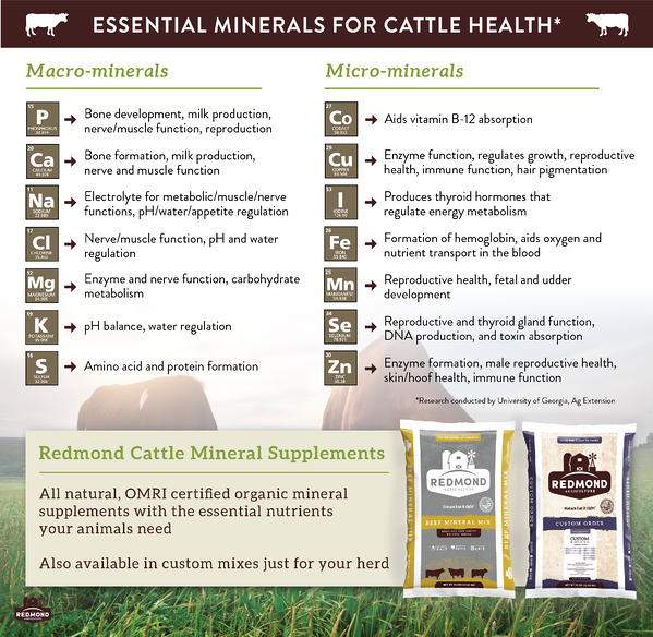Essential minerals cattle need to be healthy