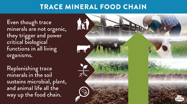 How trace minerals nourish all the way up the food chain