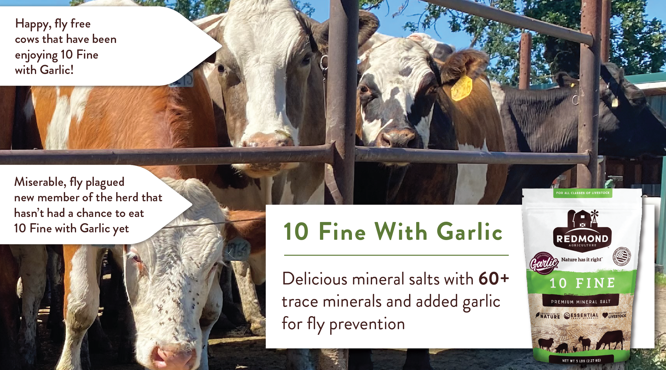Redmond 10 fine with garlic repels flies and reduces methane output