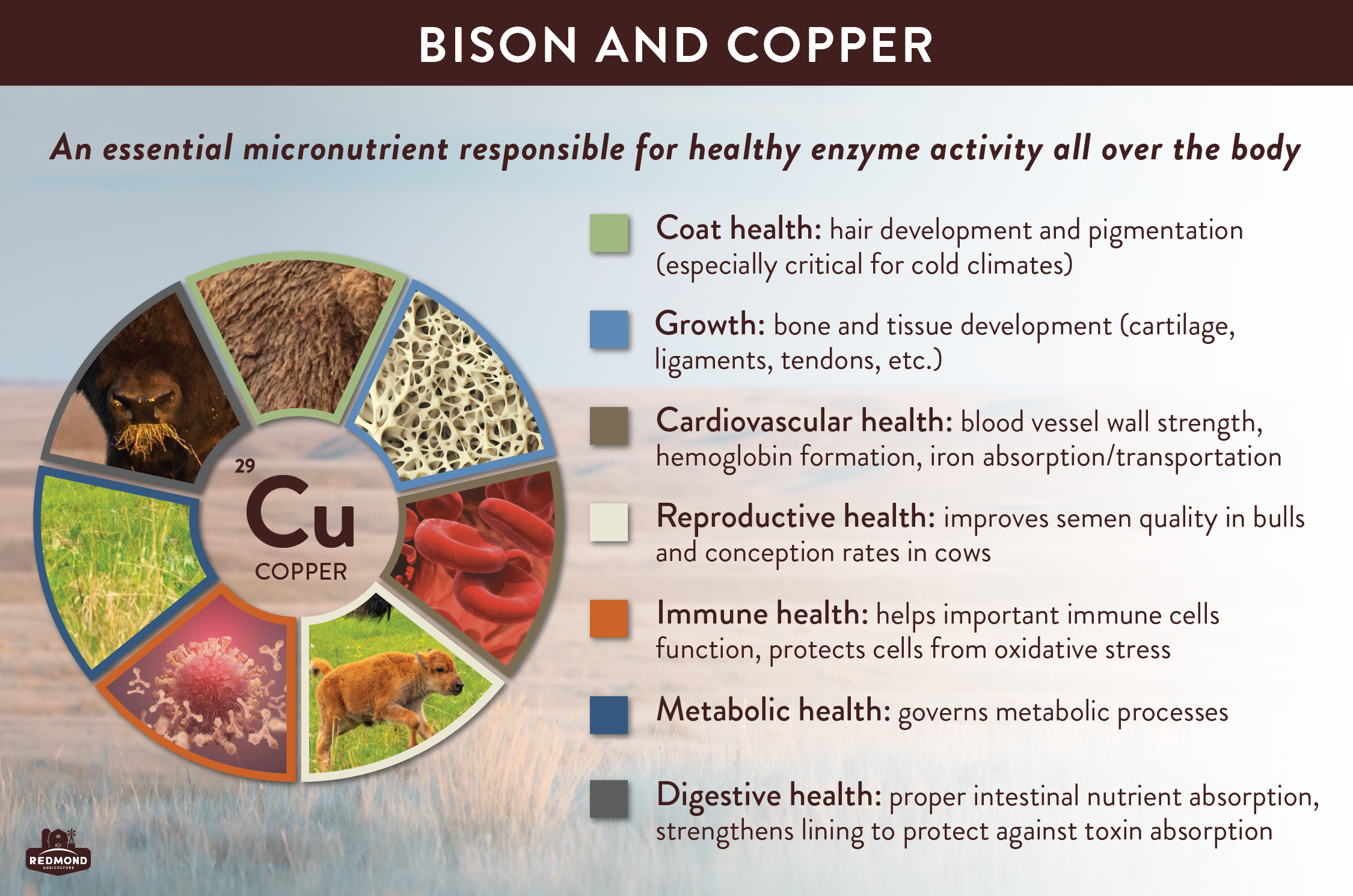why do bison need copper