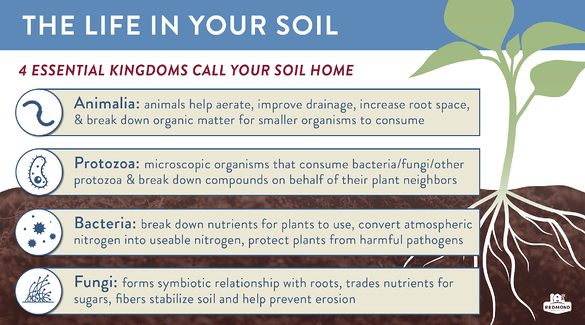 Which organisms live in your soil