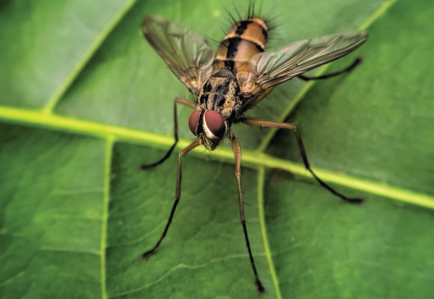 Fly sitting on a leaf