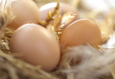 Chicken eggs on a bed of feathers and straw